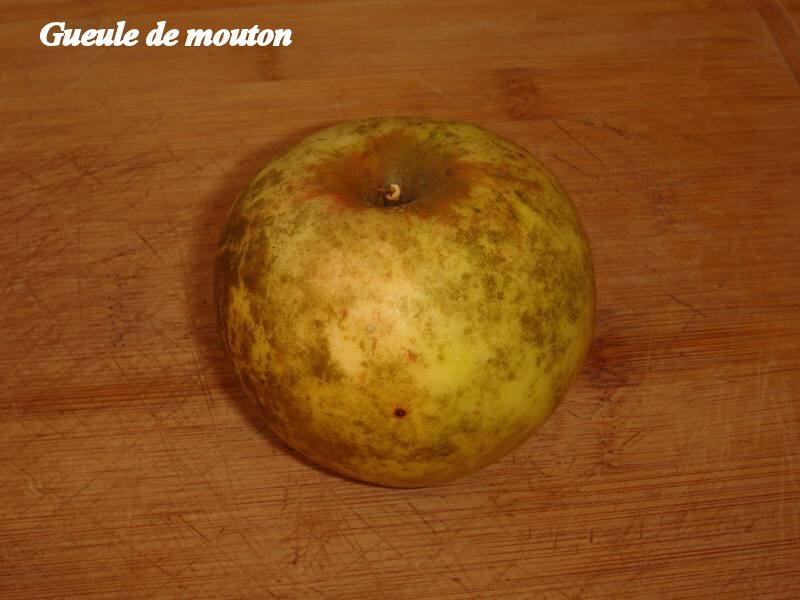 Gueule-de-mouton_02