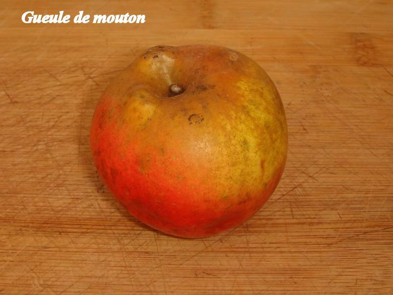 Gueule-de-mouton_03