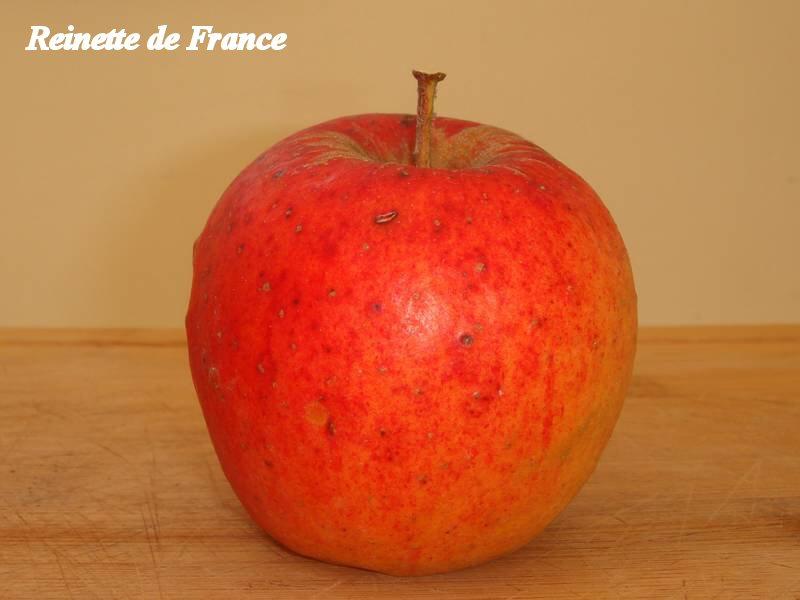 Reinette-de-France_01