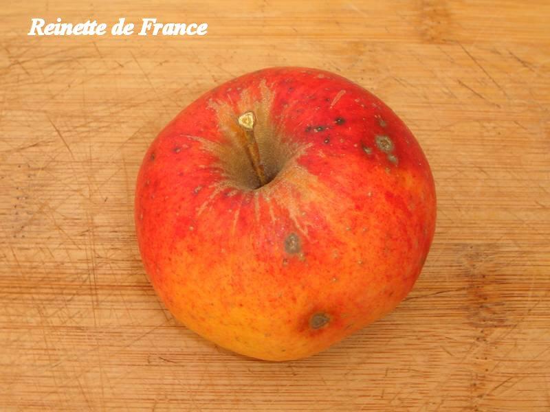 Reinette-de-France_03