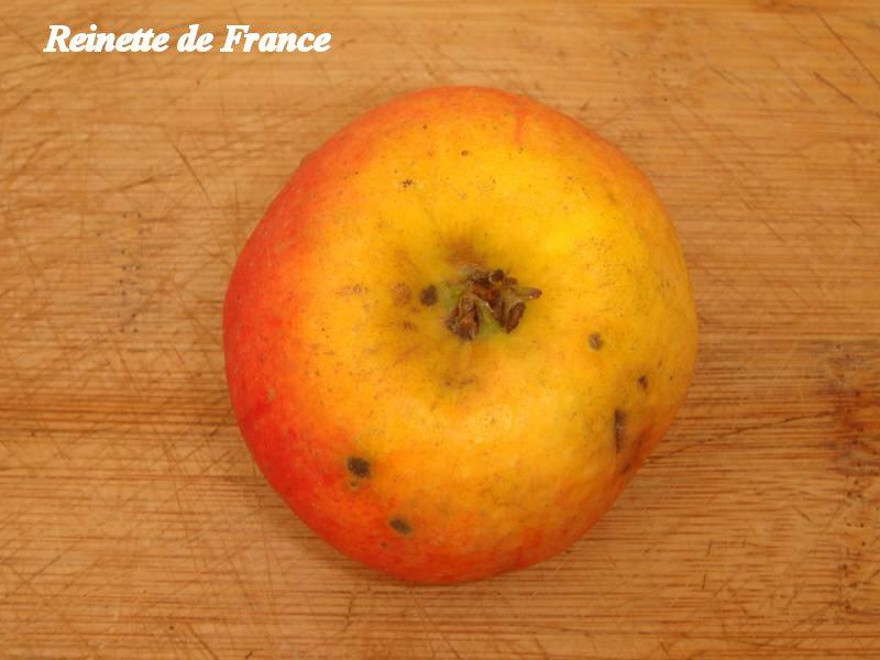 Reinette-de-France_04