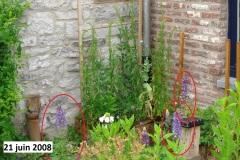jardinieres_21-juin_2008_01