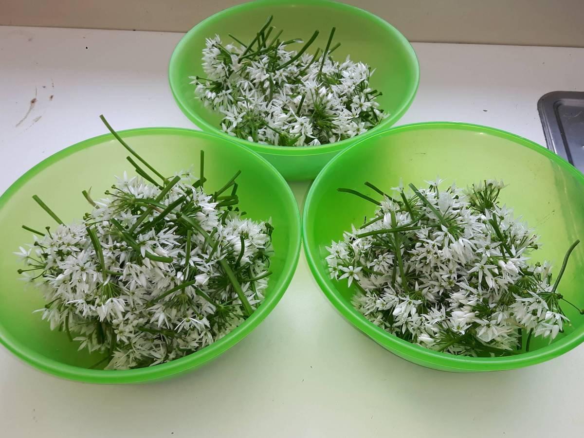 sechage-fleurs-ail-des-ours_29-04-19_04