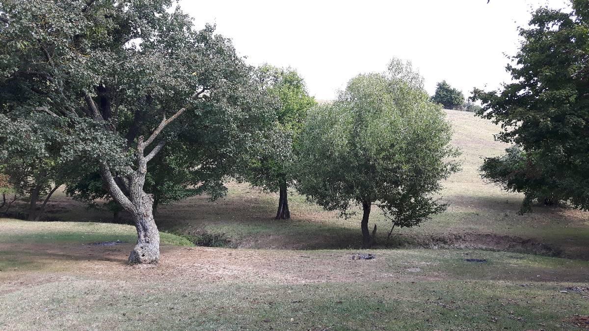 agroforesterie_10-09-2018_04