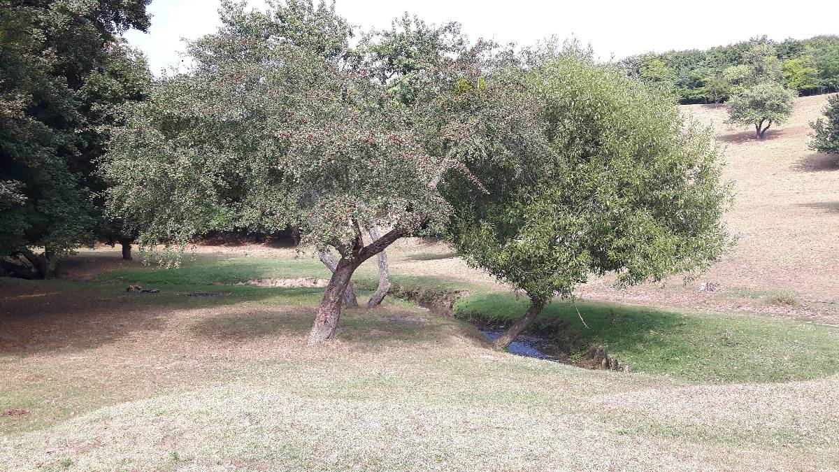 agroforesterie_10-09-2018_05