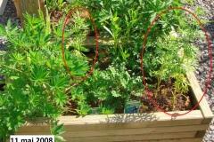 jardinieres_11-mai_2008_11