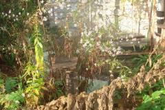 MonJardin-09-10-2011_03